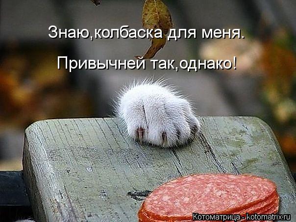 Котоматрица: Знаю,колбаска для меня. Привычней так,однако!
