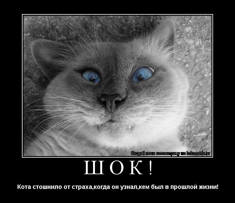 Котоматрица: ШОК! Кота стошнило от страха,когда он узнал,кем был в прошлой жизни!