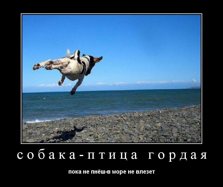 Котоматрица: собака-птица гордая пока не пнёш-в море не влезет
