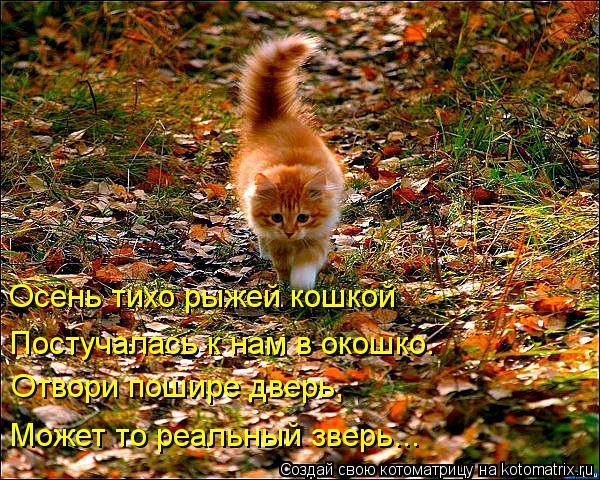 Котоматрица: Отвори пошире дверь, Может то реальный зверь... Осень тихо рыжей кошкой Постучалась к нам в окошко.