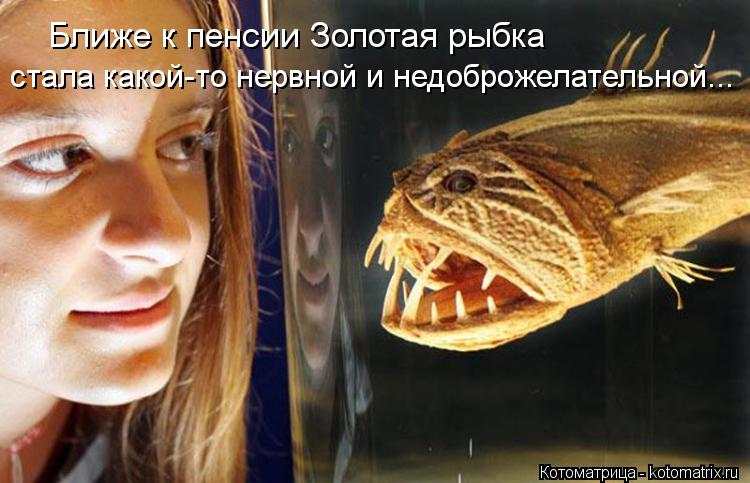 Котоматрица: Ближе к пенсии Золотая рыбка стала какой-то нервной и недоброжелательной...