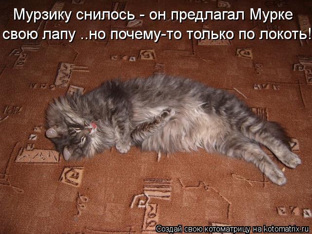 Котоматрица: Мурзику снилось - он предлагал Мурке свою лапу ..но почему-то только по локоть!