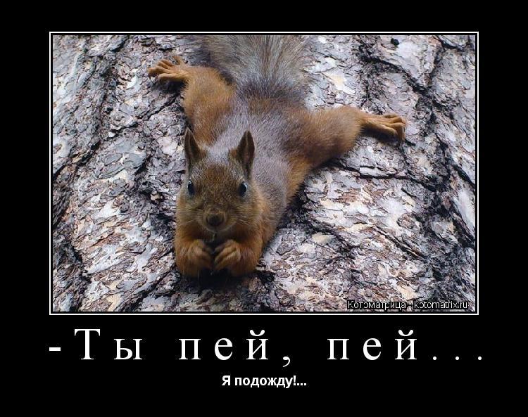 http://kotomatrix.ru/images/lolz/2012/10/16/g.jpg