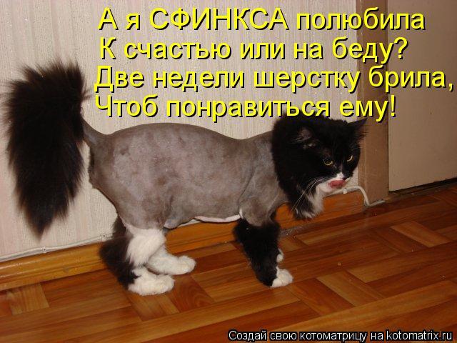 Котоматрица: А я СФИНКСА полюбила К счастью или на беду? Две недели шерстку брила, Чтоб понравиться ему!