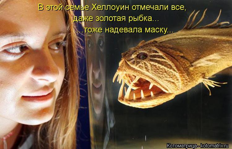 Котоматрица: В этой семье Хеллоуин отмечали все, даже золотая рыбка... ...тоже надевала маску...