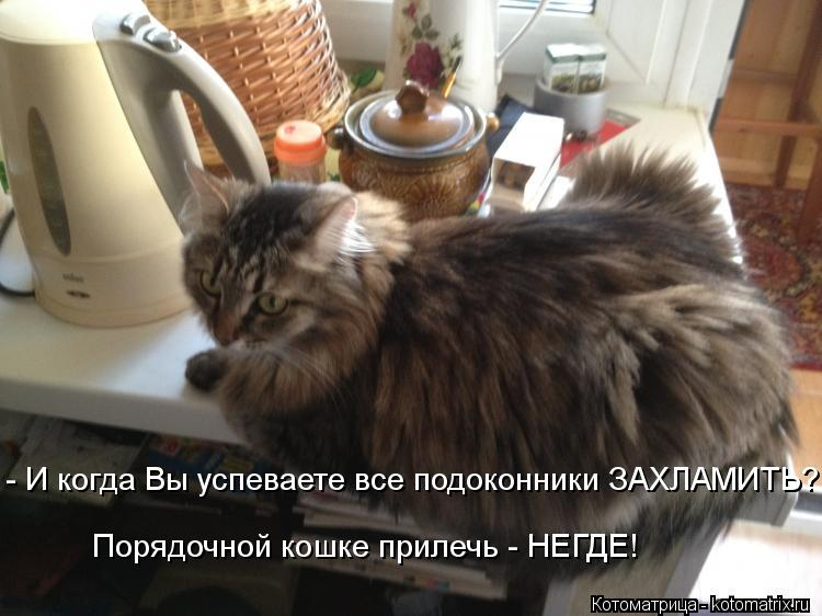 Котоматрица: - И когда Вы успеваете все подоконники ЗАХЛАМИТЬ? Порядочной кошке прилечь - НЕГДЕ!