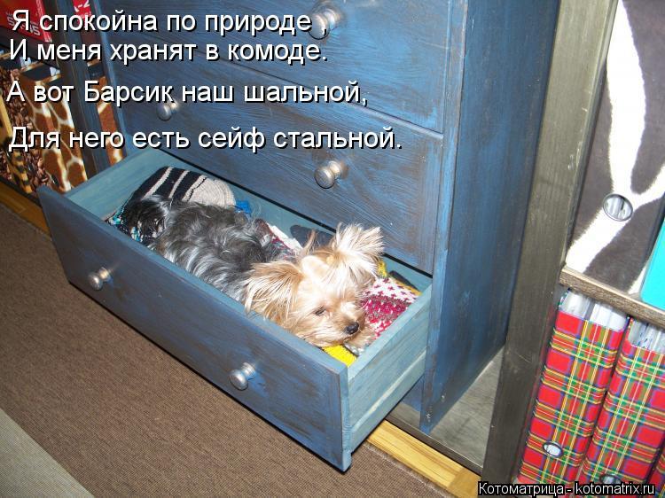 Котоматрица: Я спокойна по природе , И меня хранят в комоде. А вот Барсик наш шальной, Для него есть сейф стальной.