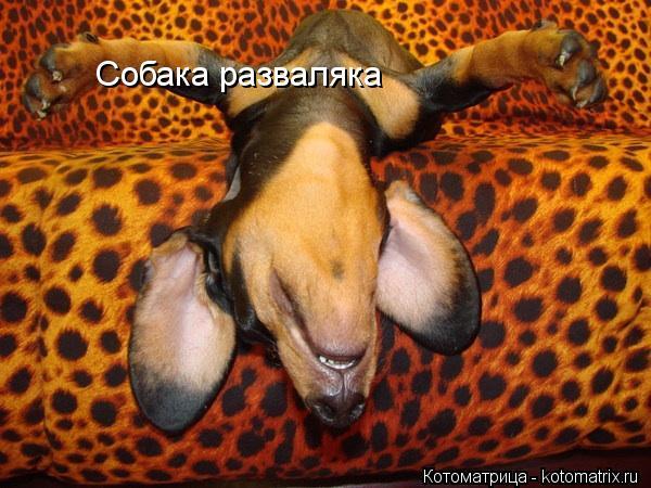 Котоматрица: Собака разваляка
