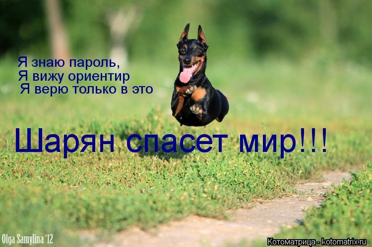 Котоматрица: Я знаю пароль, Я вижу ориентир Я верю только в это Шарян спасет мир!!!