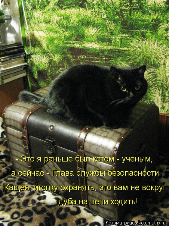 Котоматрица: - Это я раньше был котом - ученым, а сейчас - Глава службы безопасности  Кащея, иголку охранять, это вам не вокруг дуба на цепи ходить!..
