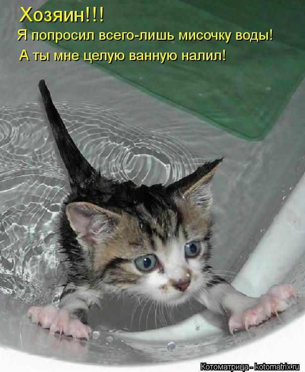 Котоматрица: Хозяин!!! Я попросил всего-лишь мисочку воды! А ты мне целую ванную налил!