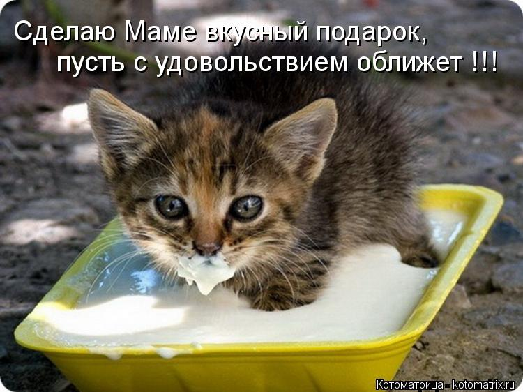 Котоматрица: Сделаю Маме вкусный подарок, пусть с удовольствием оближет !!!