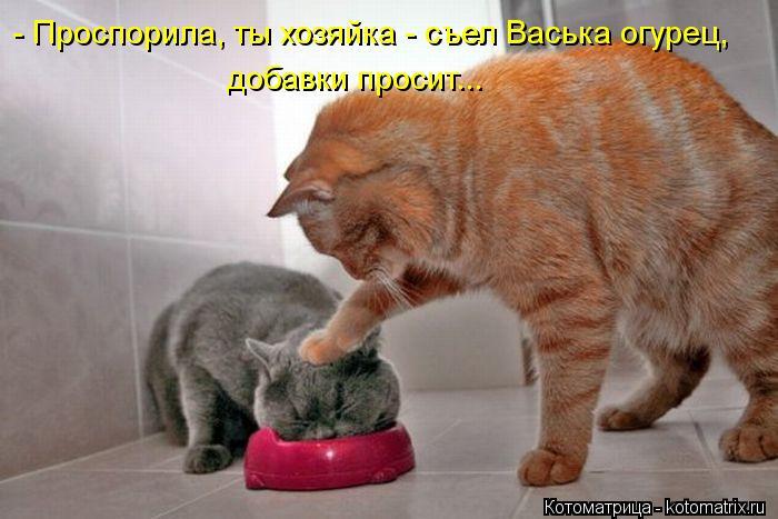 Котоматрица: - Проспорила, ты хозяйка - съел Васька огурец, добавки просит...