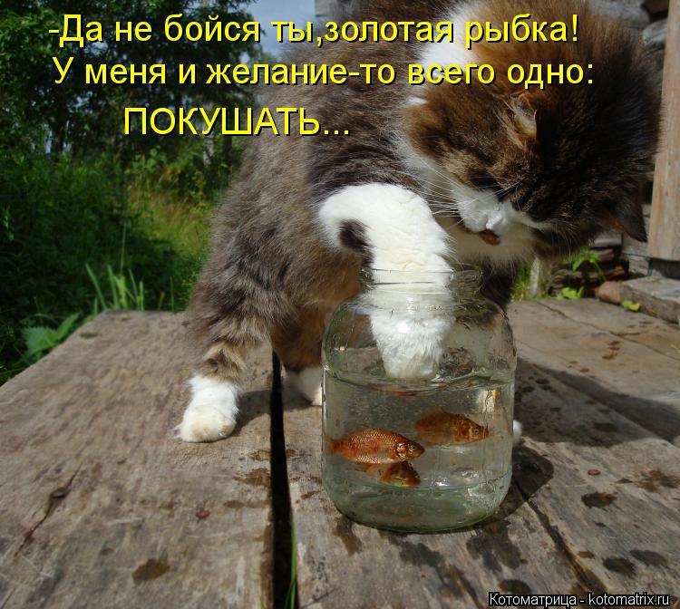 Котоматрица: -Да не бойся ты,золотая рыбка! У меня и желание-то всего одно: ПОКУШАТЬ...