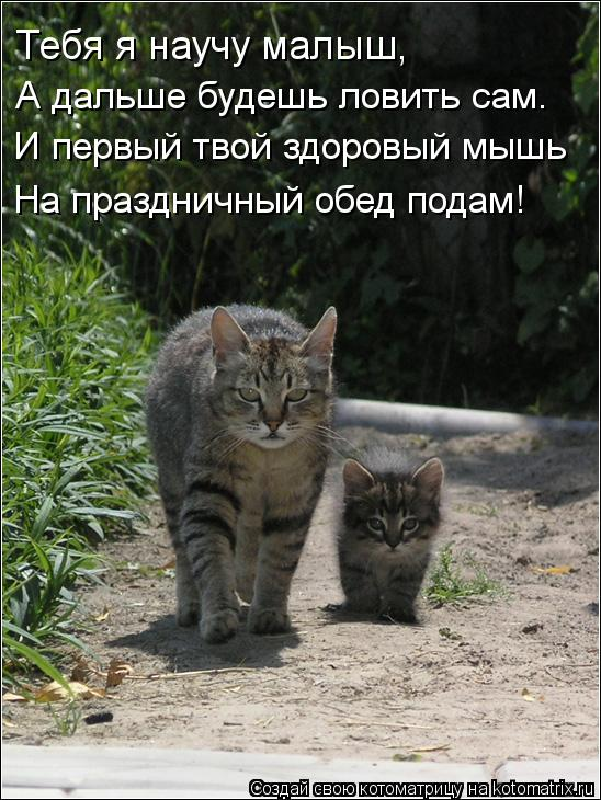 Котоматрица: Тебя я научу малыш, А дальше будешь ловить сам. И первый твой здоровый мышь На праздничный обед подам!