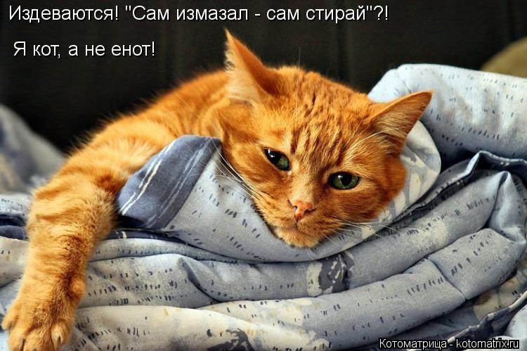 """Котоматрица: Издеваются! """"Сам измазал - сам стирай""""?! Я кот, а не енот!"""