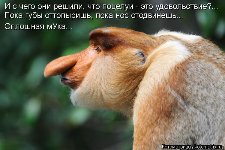 Котоматрица: И с чего они решили, что поцелуи - это удовольствие?... Пока губы оттопыришь, пока нос отодвинешь... Сплошная мУка...