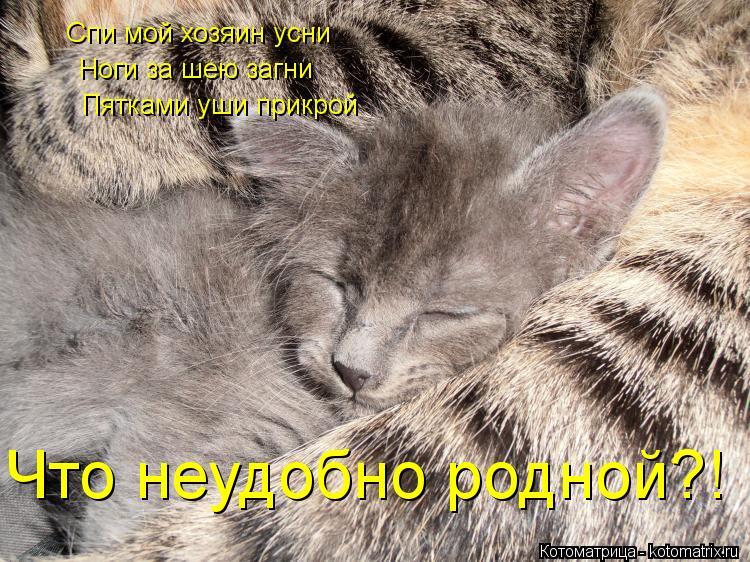 Котоматрица: Спи мой хозяин усни Ноги за шею загни Пятками уши прикрой Что неудобно родной?!