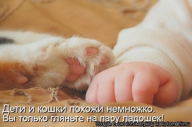 Котоматрица: Дети и кошки похожи немножко. Вы только гляньте на пару ладошек!