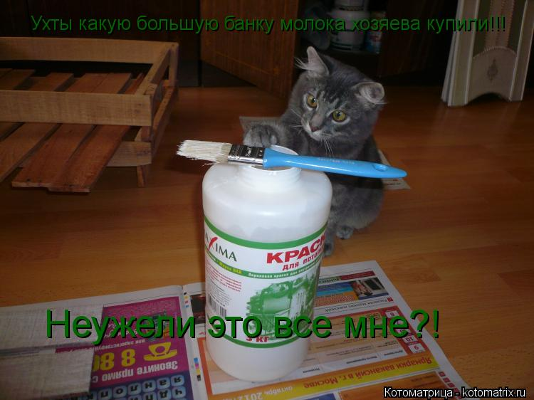Котоматрица: Ухты какую большую банку молока хозяева купили!!! Неужели это все мне?!