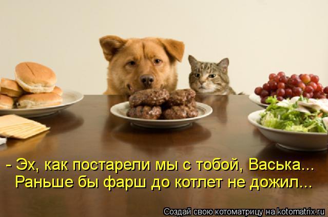 Котоматрица: - Эх, как постарели мы с тобой, Васька... Раньше бы фарш до котлет не дожил...