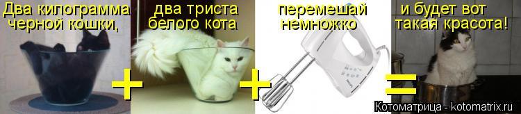 Котоматрица: Два килограмма     два триста        перемешай       и будет вот черной кошки,      белого кота         немножко        такая красота! +     +      =