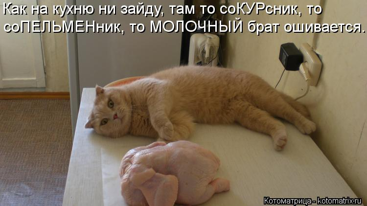 Котоматрица: Как на кухню ни зайду, там то соКУРсник, то соПЕЛЬМЕНник, то МОЛОЧНЫЙ брат ошивается.