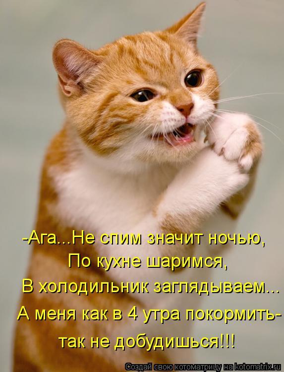 Котоматрица: -Ага...Не спим значит ночью, По кухне шаримся, В холодильник заглядываем... А меня как в 4 утра покормить-  так не добудишься!!!