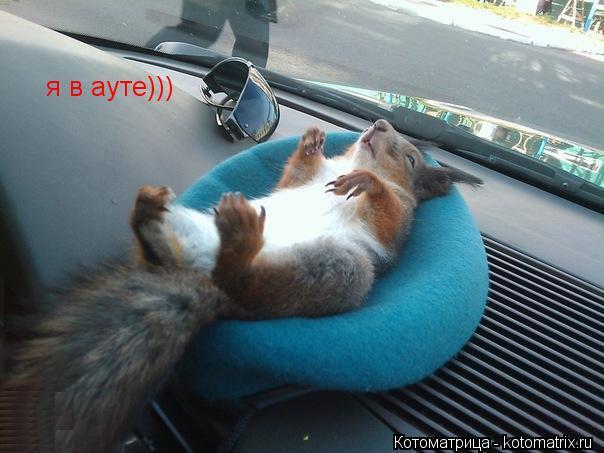 Котоматрица: я в ауте))) я в ауте)))