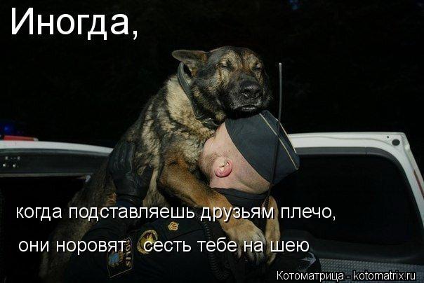 Котоматрица: Иногда, когда подставляешь друзьям плечо, они норовят   сесть тебе на шею
