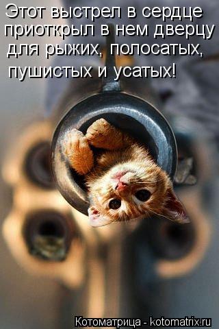 Котоматрица: Этот выстрел в сердце приоткрыл в нем дверцу для рыжих, полосатых, пушистых и усатых!