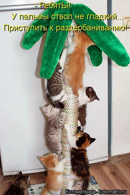 Котоматрица: - РебятЫ! У пальмы ствол не гладкий... Приступить к раздербаниванию!