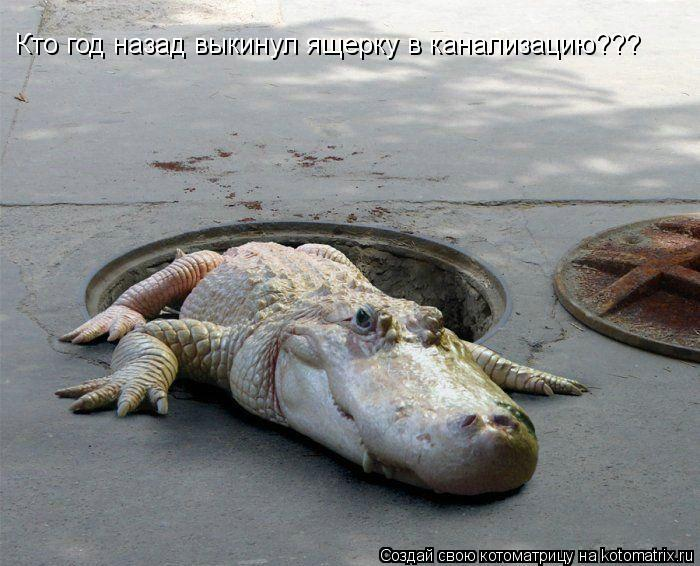 Котоматрица: Кто год назад выкинул ящерку в канализацию???