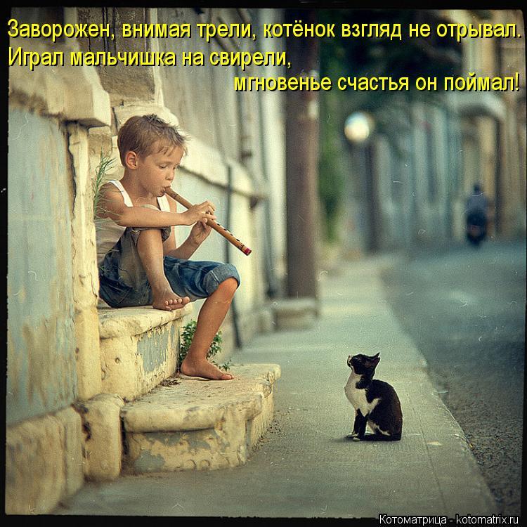 Котоматрица: Заворожен, внимая трели, котёнок взгляд не отрывал. Играл мальчишка на свирели,  мгновенье счастья он поймал!