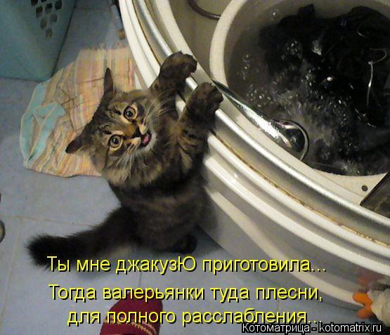 Котоматрица: Тогда валерьянки туда плесни, Ты мне джакузЮ приготовила...  для полного расслабления...