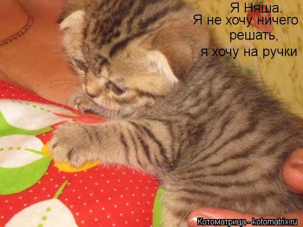 http://kotomatrix.ru/images/lolz/2012/10/18/kotomatritsa_m1.jpg