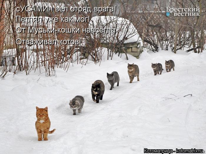 Котоматрица: сУСАМИн вел отряд врага! Петлял уже как мог! От Муськи-кошки навсегда Отваживал котов!