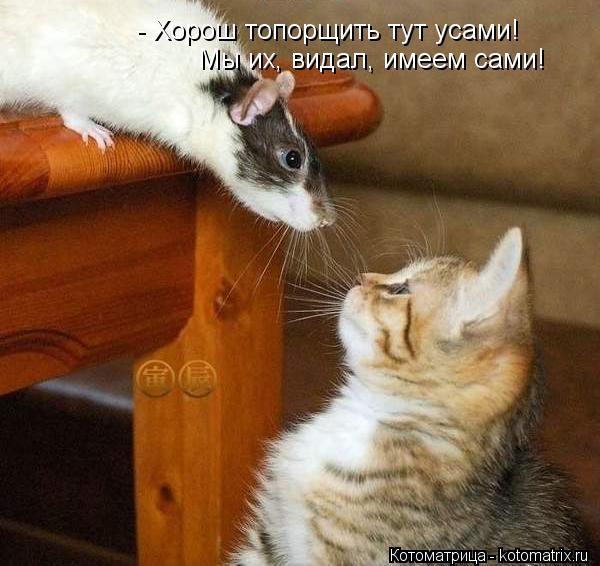 Котоматрица: - Хорош топорщить тут усами! Мы их, видал, имеем сами!