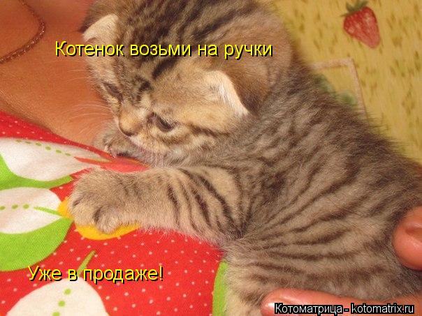 Котоматрица: Котенок возьми на ручки Уже в продаже!