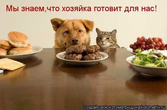 Котоматрица: Мы знаем,что хозяйка готовит для нас!