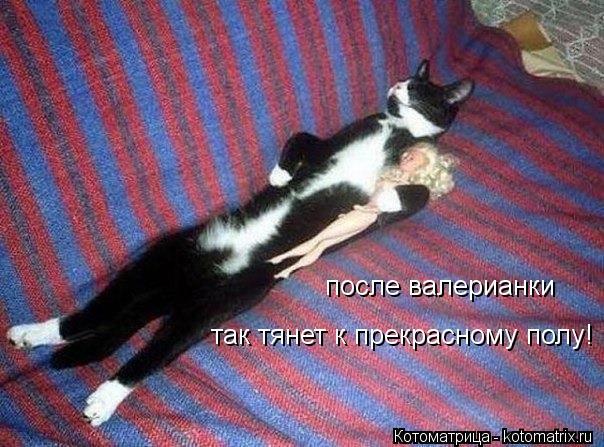 Котоматрица: после валерианки так тянет к прекрасному полу!