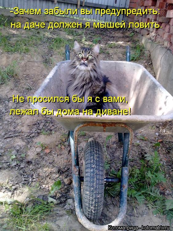 Приснилось что знакомая поймала мышь