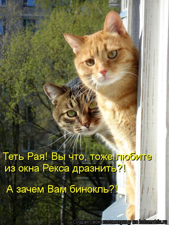 Котоматрица: Теть Рая! Вы что, тоже любите из окна Рекса дразнить?! А зачем Вам бинокль?!