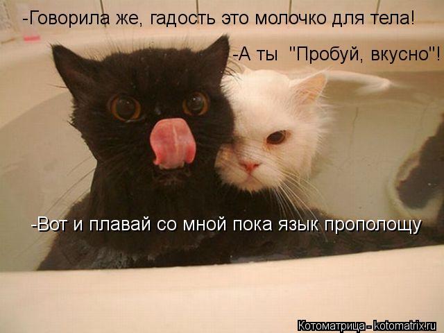 """Котоматрица: -Говорила же, гадость это молочко для тела! -А ты  """"Пробуй, вкусно""""! -Вот и плавай со мной пока язык прополощу"""