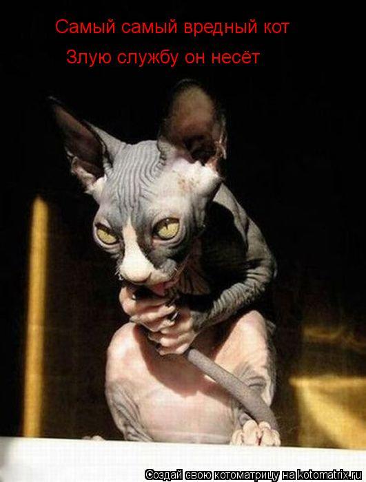 Котоматрица: Самый самый вредный кот  Злую службу он несёт