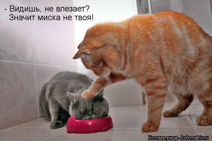 Котоматрица: - Видишь, не влезает? Значит миска не твоя!