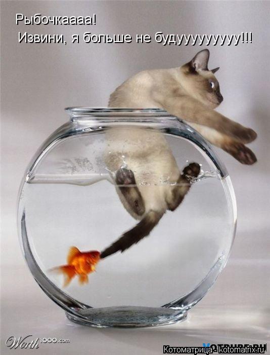 Котоматрица: Рыбочкаааа! Извини, я больше не будууууууууу!!!
