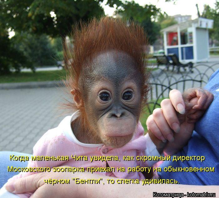 """Котоматрица: Когда маленькая Чита увидела, как скромный директор  Московского зоопарка приехал на работу на обыкновенном  чёрном """"Бентли"""", то слегка уди"""