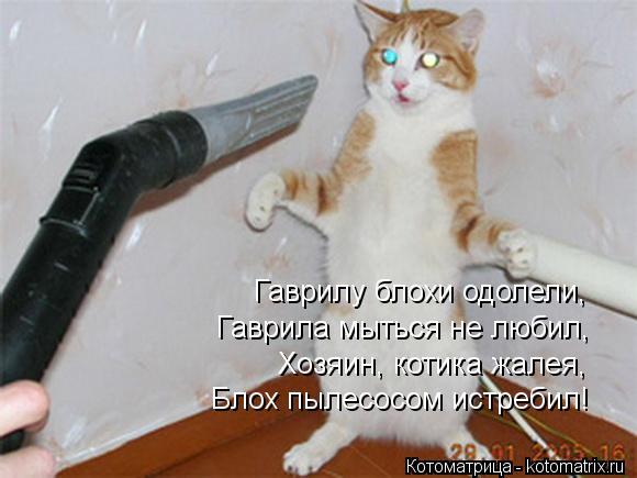 Котоматрица: Гаврилу блохи одолели, Гаврила мыться не любил, Хозяин, котика жалея, Блох пылесосом истребил!