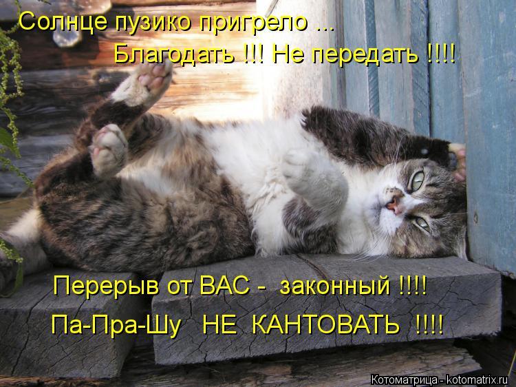 Котоматрица: Солнце пузико пригрело ... Благодать !!! Не передать !!!! Перерыв от ВАС -  законный !!!! Па-Пра-Шу   НЕ  КАНТОВАТЬ  !!!!